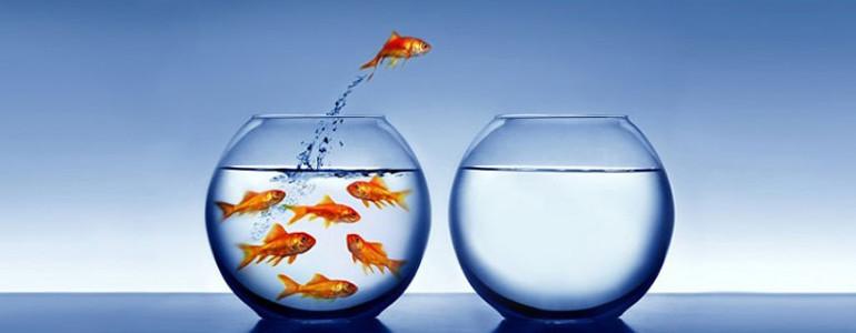 actie ondernemen vis